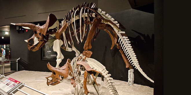Photo of University fires scientist after dinosaur discovery offers young earth evidence