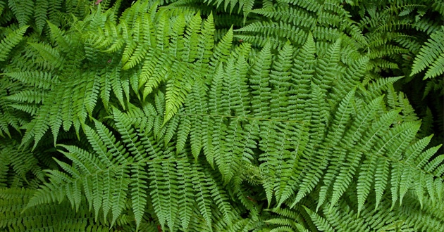 Photo of New fern discovery 'a problem' for evolutionists