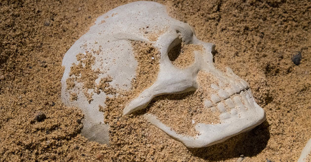 Photo of Fossils said to be 'at odds' with evolutionary theory