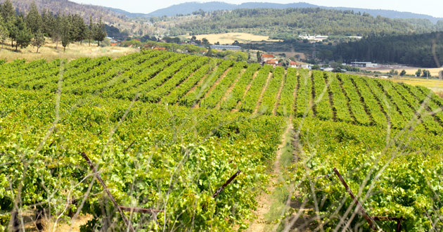 Photo of Another discovery of biblical proportions: Naboth's Vineyard
