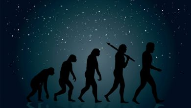 Photo of Arizona mulls evolution: Theory or settled science?
