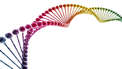 Photo of The search for the 'gay gene' | A new study, predictable reactions