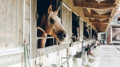 Photo of Stables of Hope